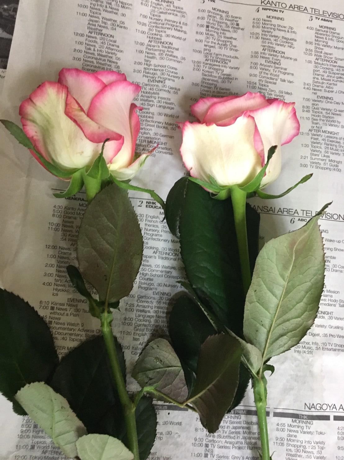 届いたバラの花