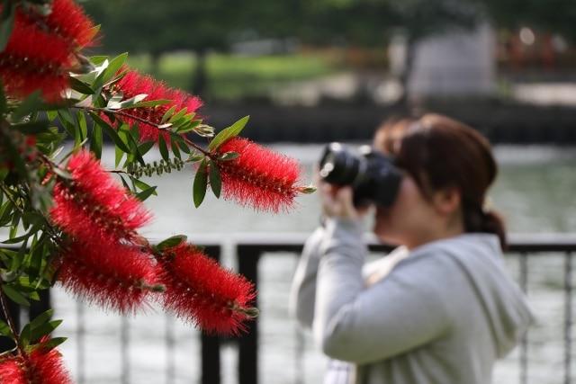 お花を撮影する人
